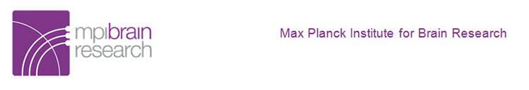 Max-Planck-Institut für Hirnforschung