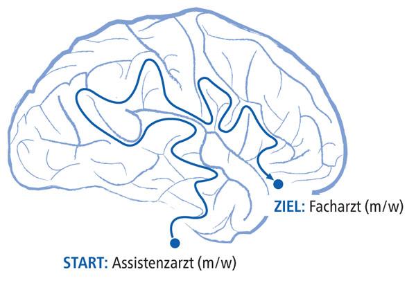 Assistenzarzt Neurologie (m/w/d) - Kliniken Schmieder - Bild
